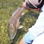 Florida Keys Fly Fishing