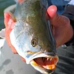 Islamorada Backcountry Fishing